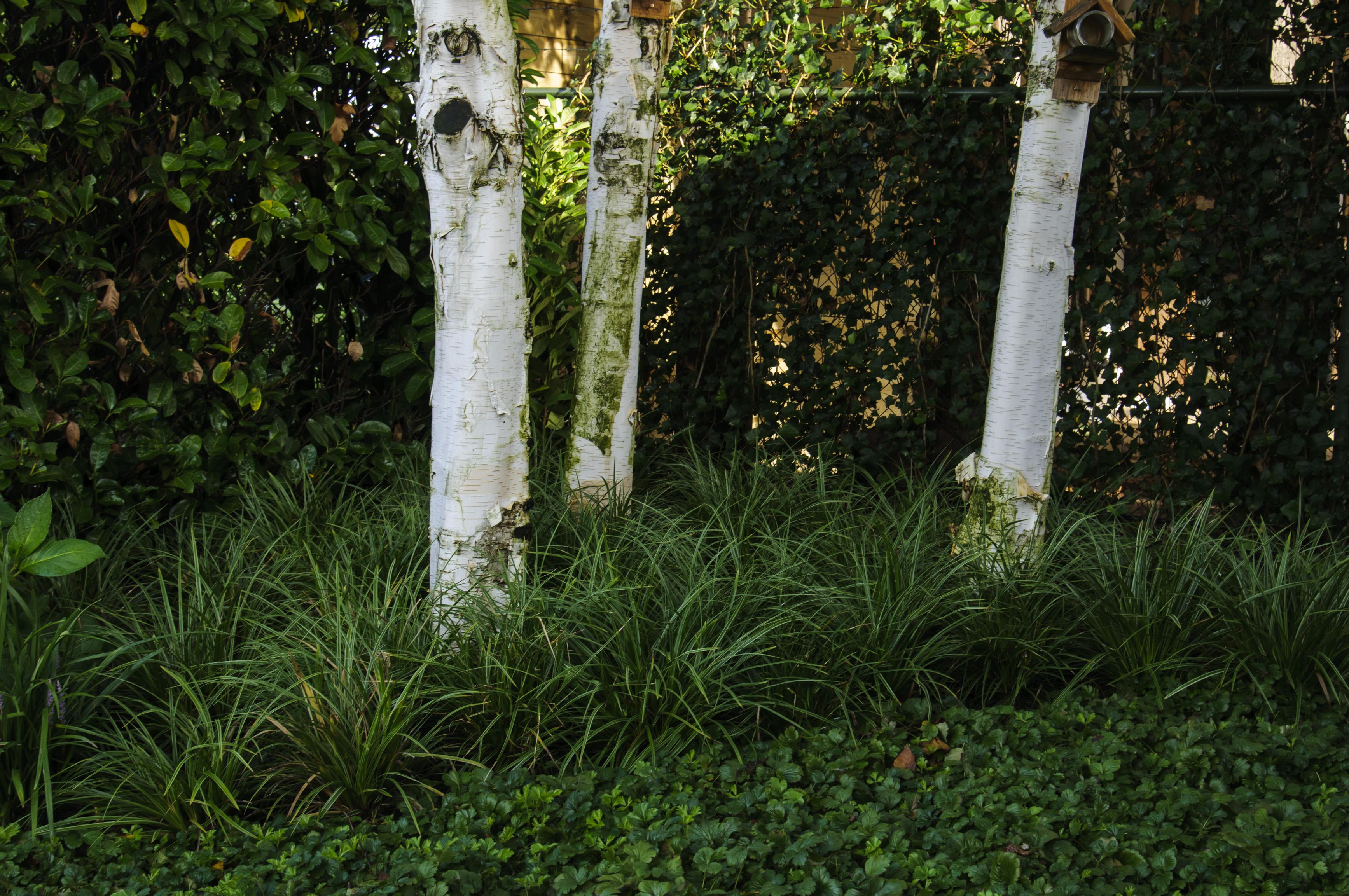 De verticale tuin